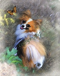 Papillon with Butterfly by Mary Fournier